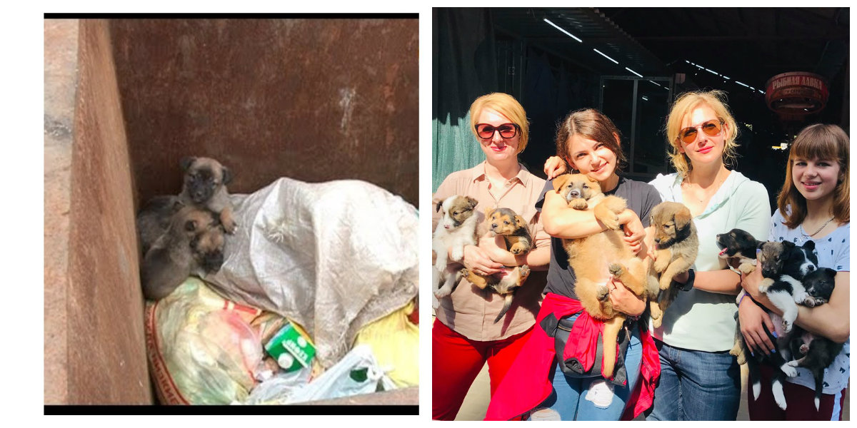 Волонтеры спасли малышей