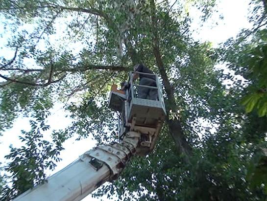 С помощью вышки кота сняли с дерева