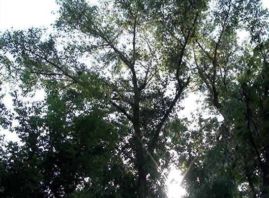В Никополе рыжий котик трое суток провел на высоком дереве