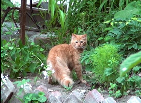 В Никополе спасли рыжего кота