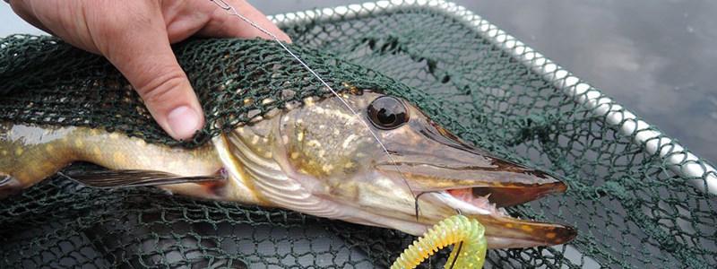 прогноз клева рыбы в брейтово