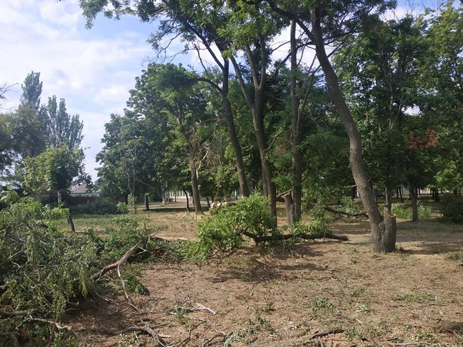 В парке Победы уничтожают зеленые деревья