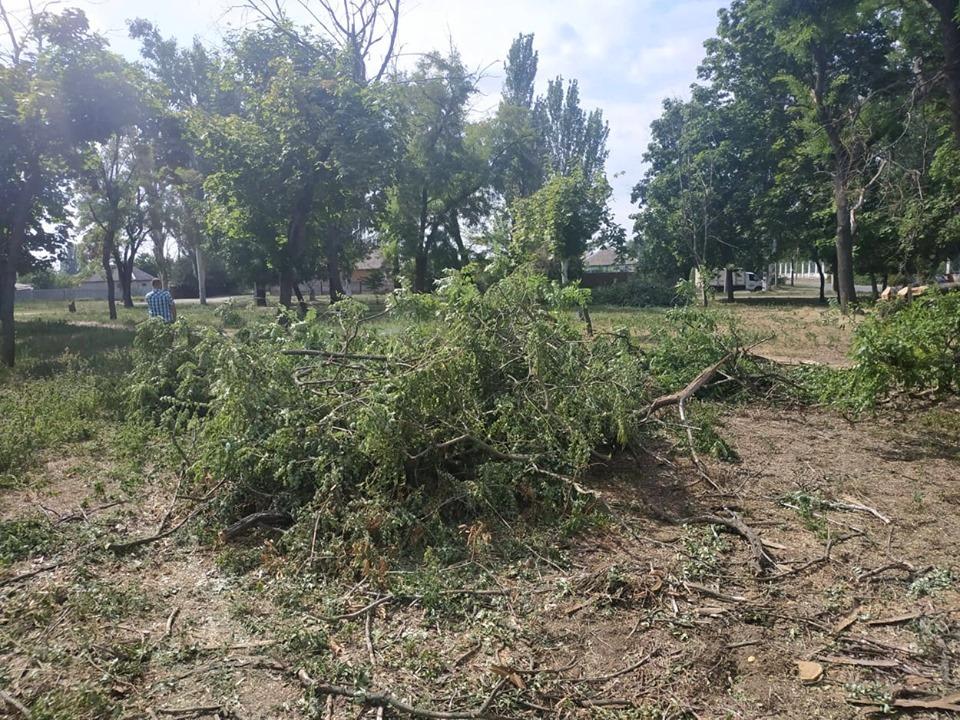 """Сегодня активистам удалось спасти 30 """"живых"""" деревьев, которые хотели спилить"""