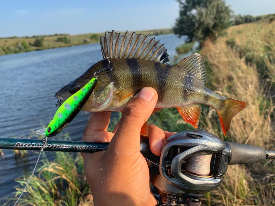 Дима Бабинец увлекается ловлей хищно рыбы и успевает сделать хорошие кадры