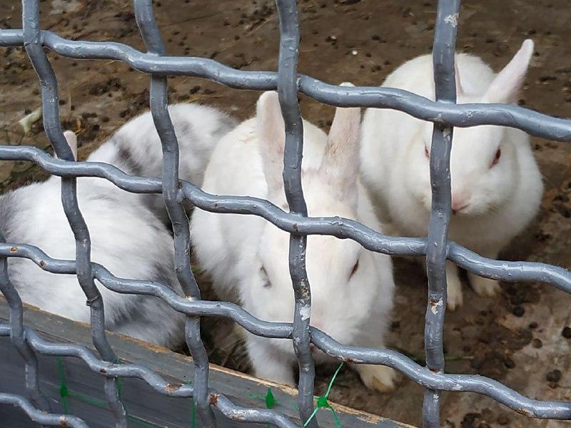 Веселое семейство кроликов
