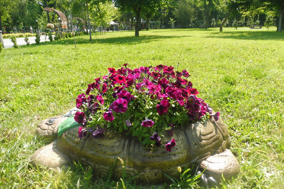 Черепаха - вазон