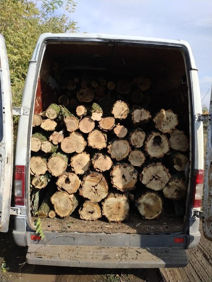 Трое жителей Никополя вырубили деревья акации