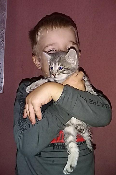 Осторожно, котики