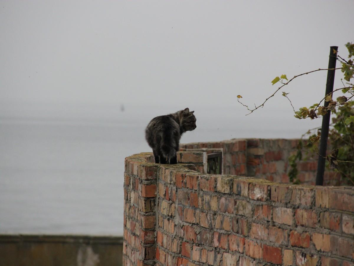 Кот, который гуляет сам по себе - дамба, старая часть города