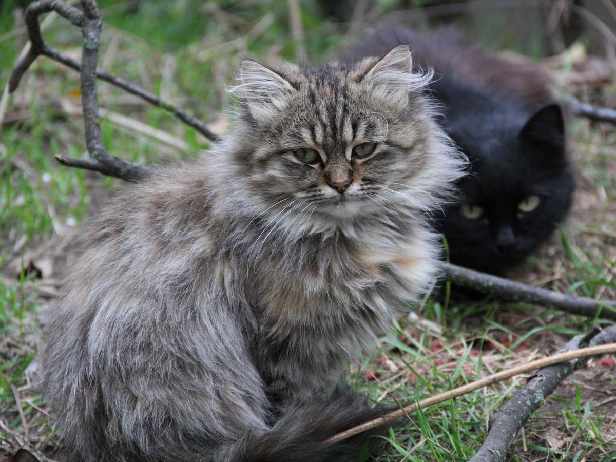 На углу дома Шевченко, 211 живет несколько котят