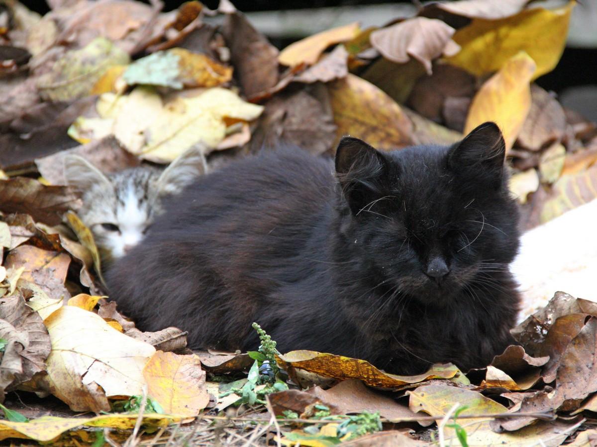 Черно-рыжий котейка ждет своего хозяина на улице Шевченко, 211
