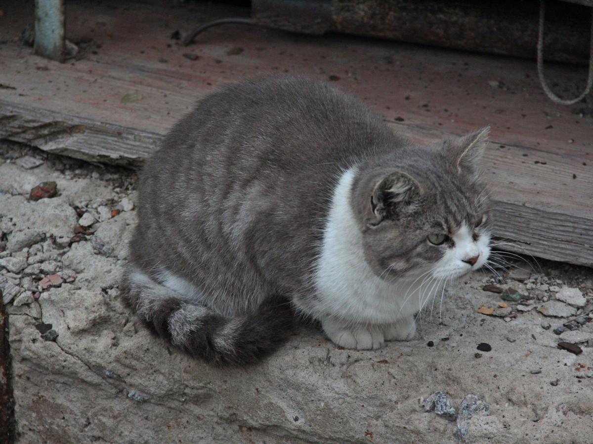 Кот заинтересован происходящим. Второй год подряд присутствует на зарыблении