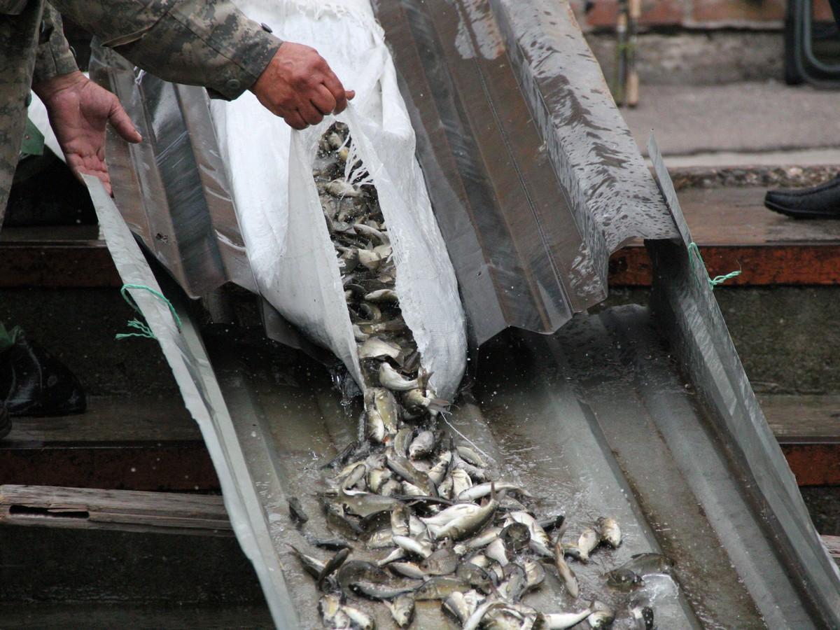 Зарыбление обошлось любителям рыбалки в 38 500 гривен