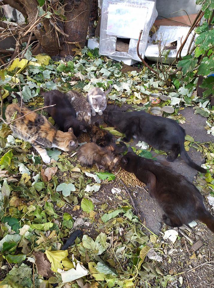 За котами ухаживают и кормят их