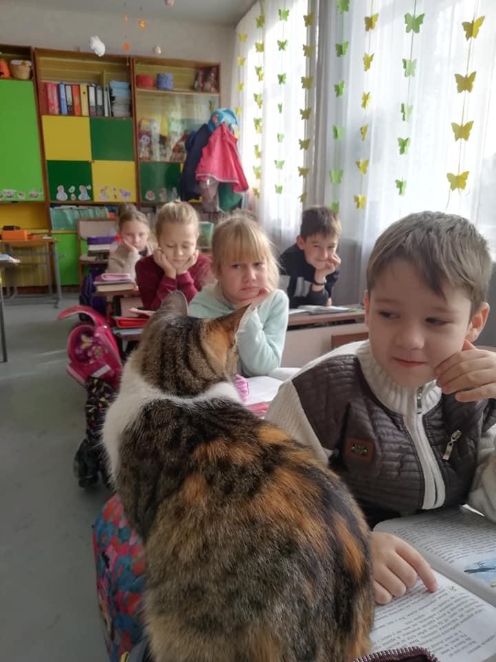 Мурка на уроке