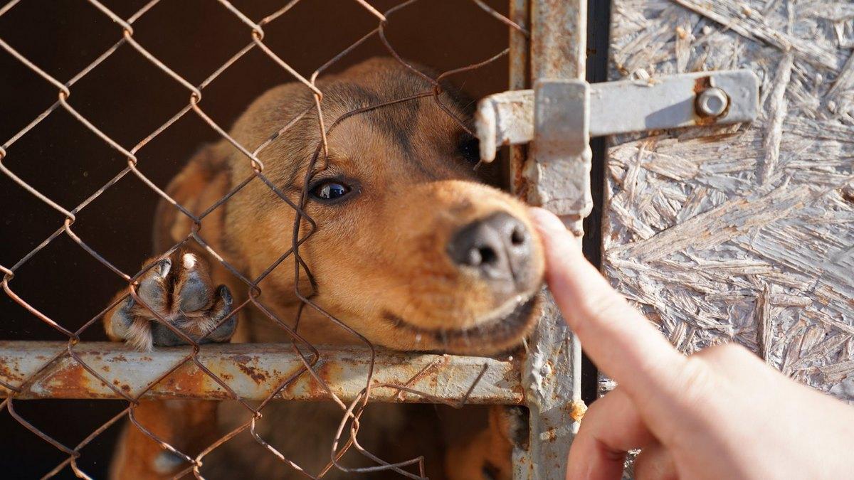 Приют для животный «Шанс на жизнь»