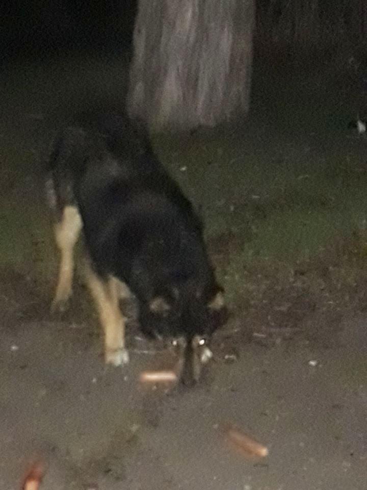 Нікопольці врятували собаку від смерті