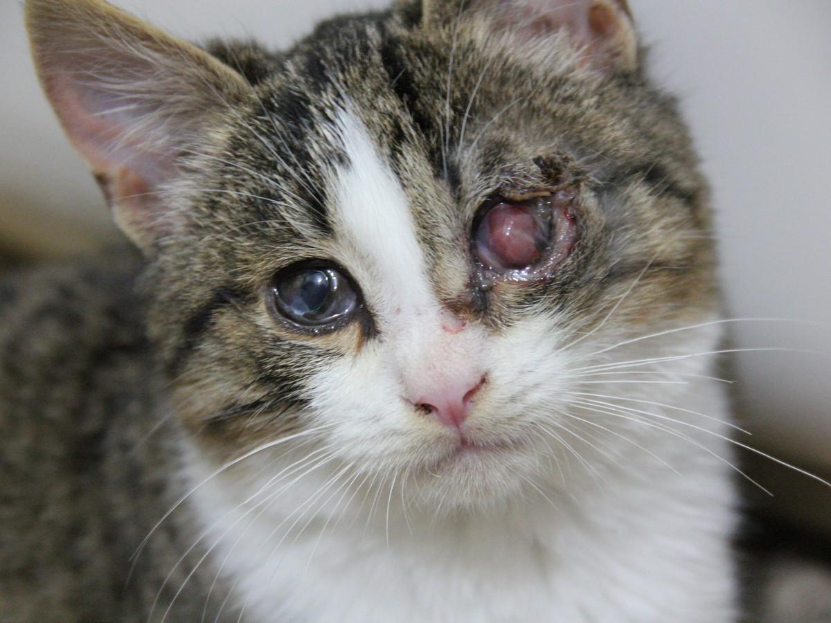 Звірство: кошеняті вибили око у Нікополі