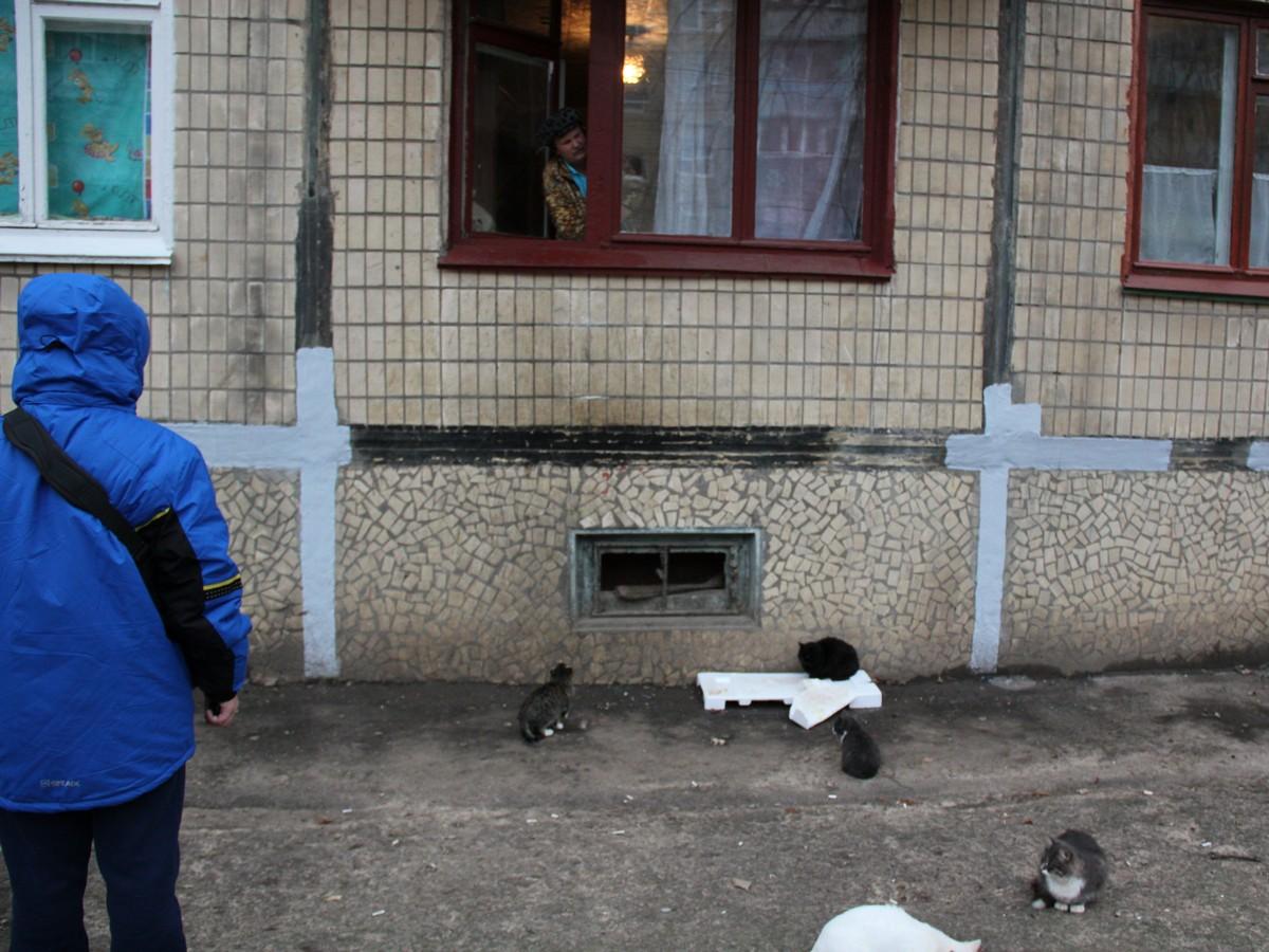 Женщина подкармливает котов