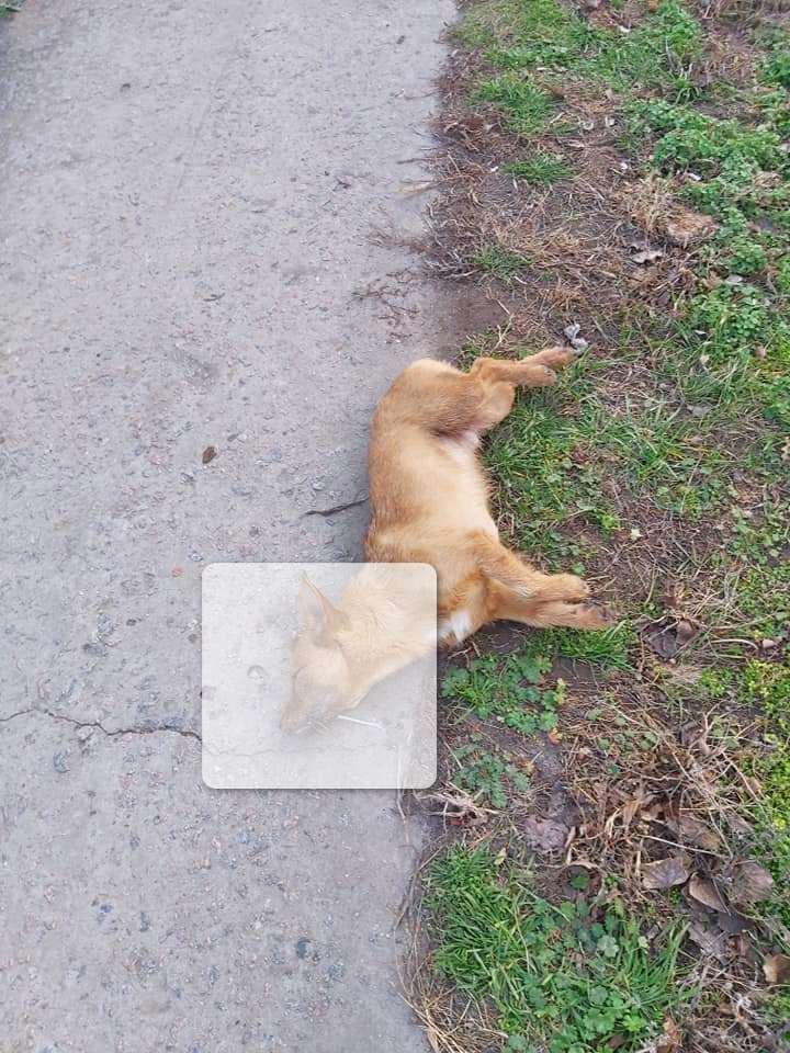 В Никополе возле школы № 8 травят собак