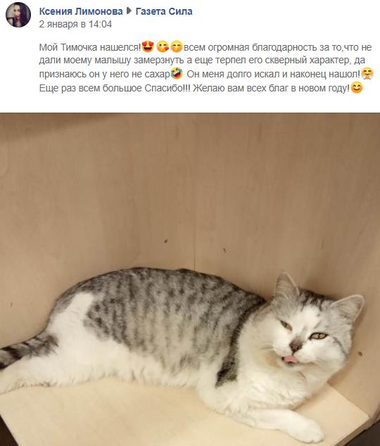 Котам у Нікополі жити добре