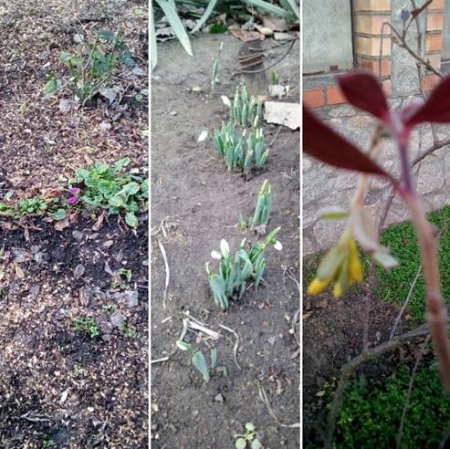 В Никополе в январе распускаются почки и цветут цветочки