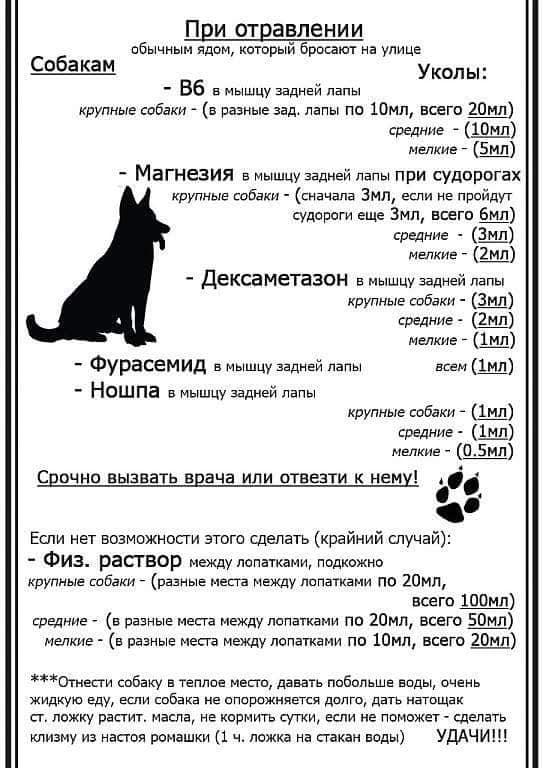 Памятка для собаководов