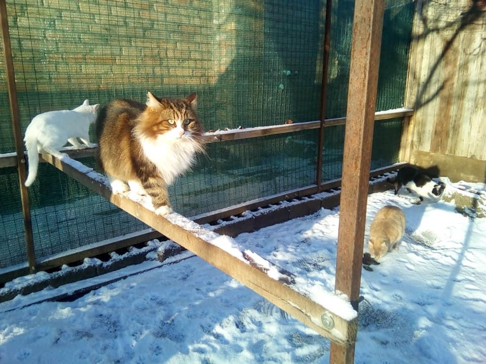 Мяу! ! Котику з Покрову чекають на любов
