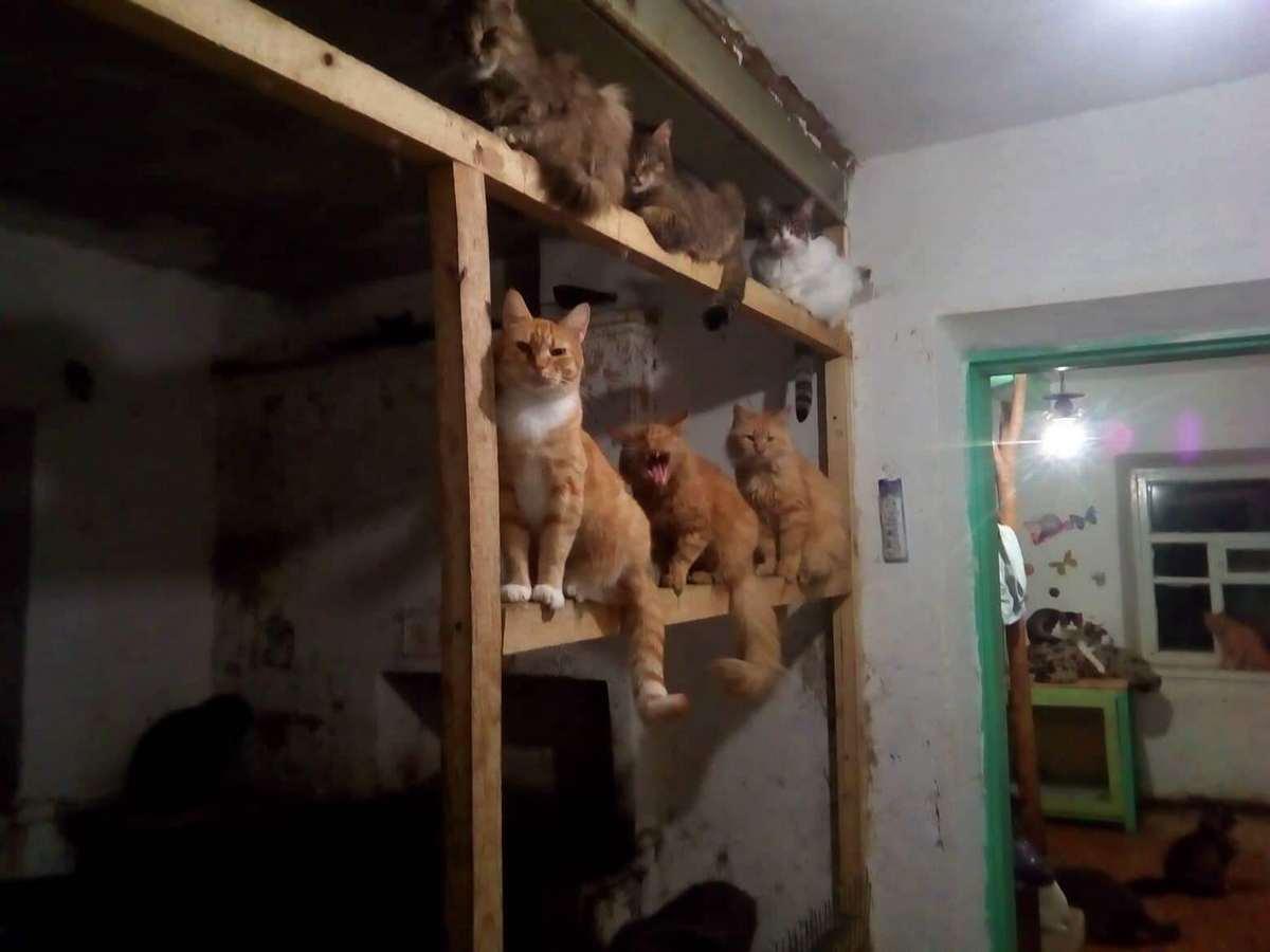 Покровські коти помирають з голоду