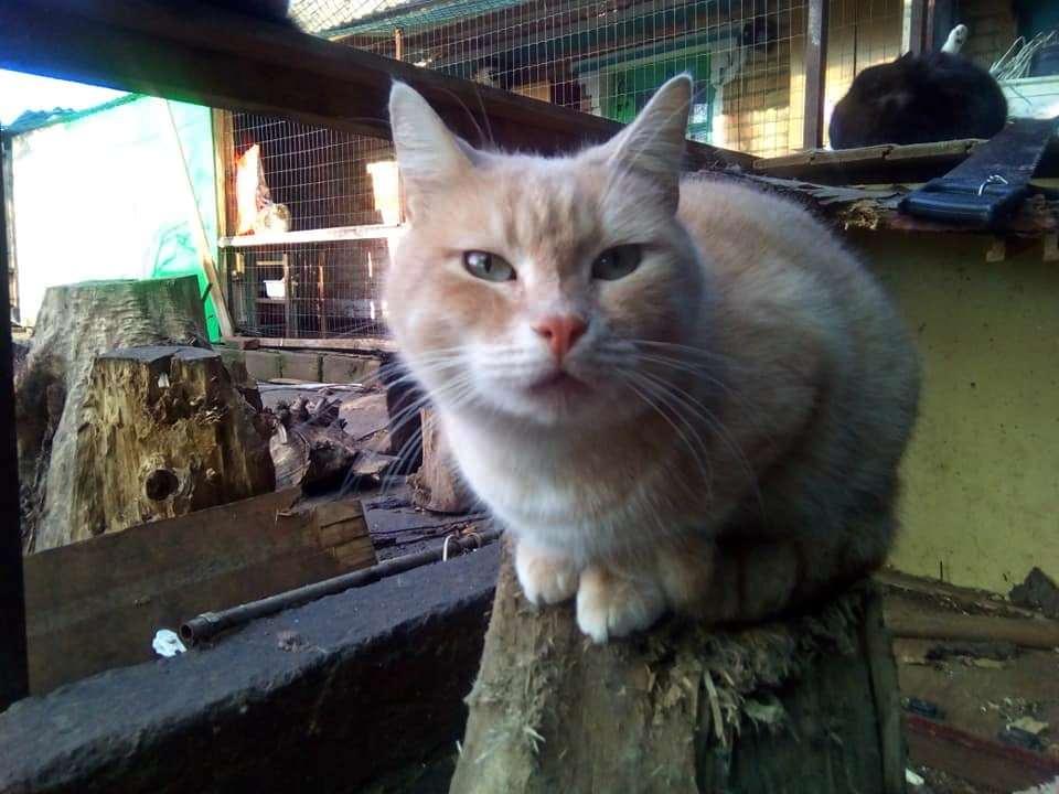Рюрик Пяточкин. Это последний сынок Фифы - первой кошки этого двора