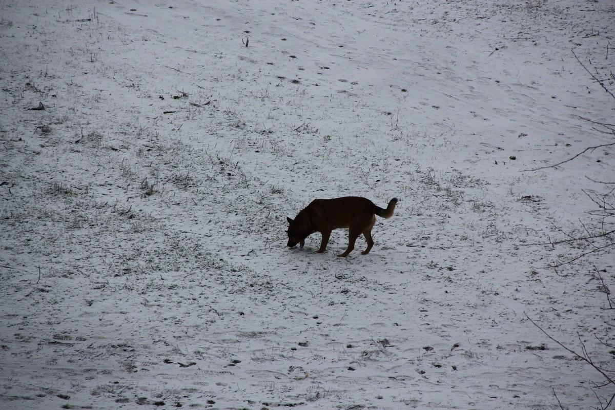 Снег, как генеральная уборка!