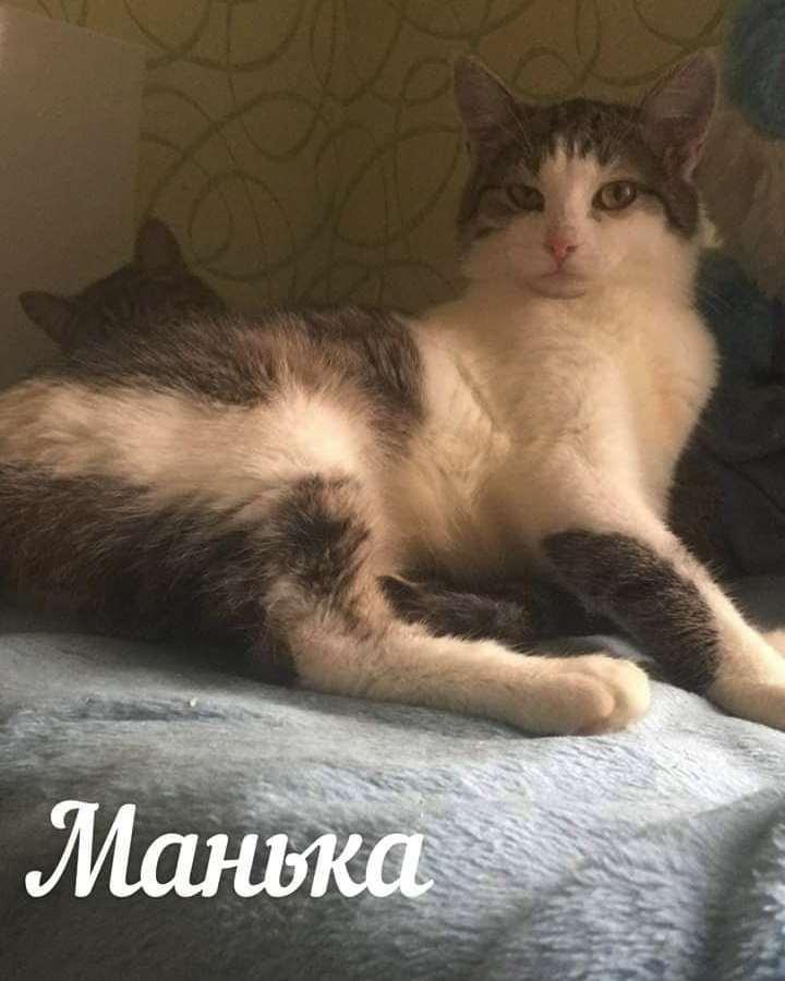 Кошка Манька
