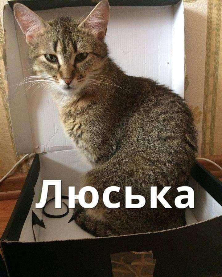 Кошка Люська