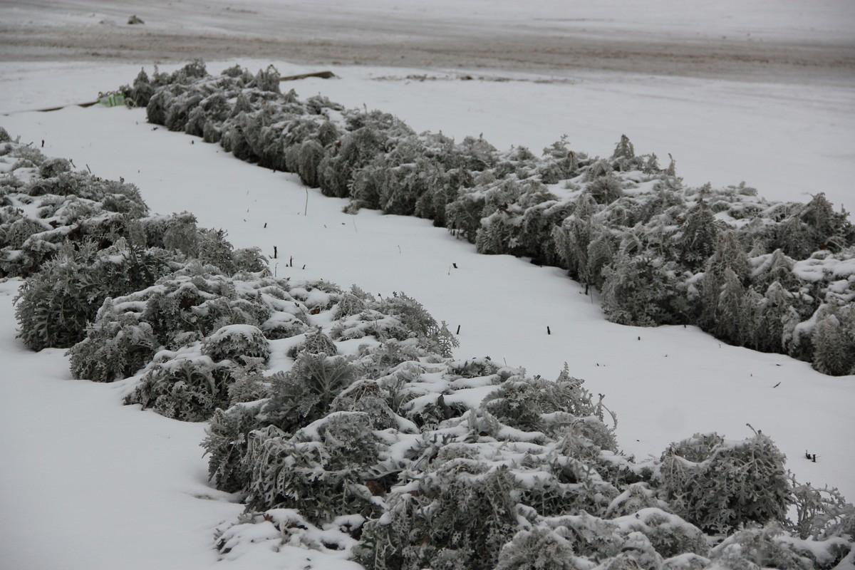 Клумба в снегу