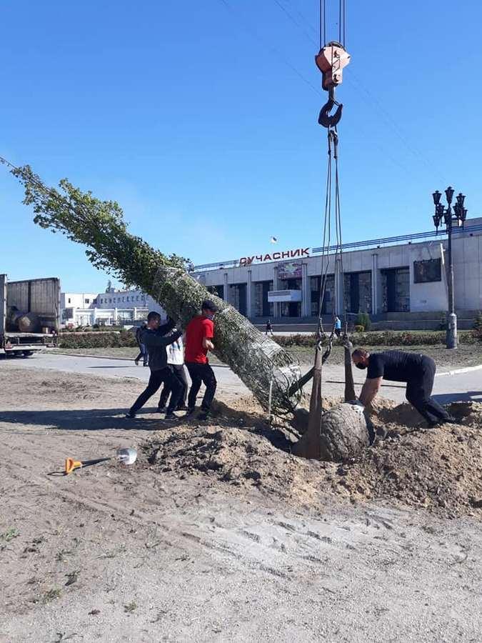 В Энергодаре высаживают 10-метровые грабы, туи, сливы и яблони