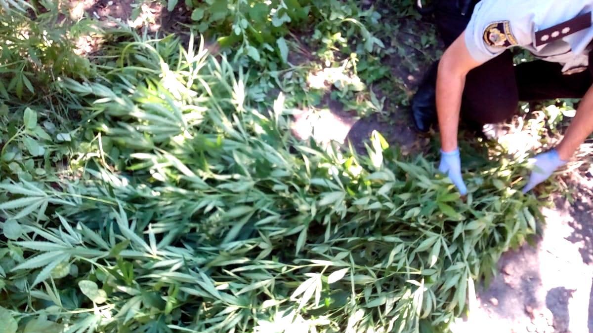 Девочка вырастила куст конопли в марихуана купить владивосток