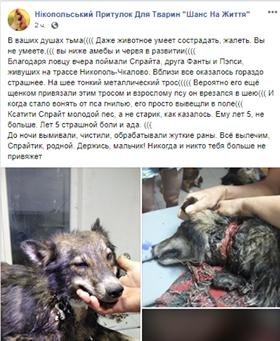 Раненую собаку с металлическим тросом на шее поймали под Никополем, фото-2