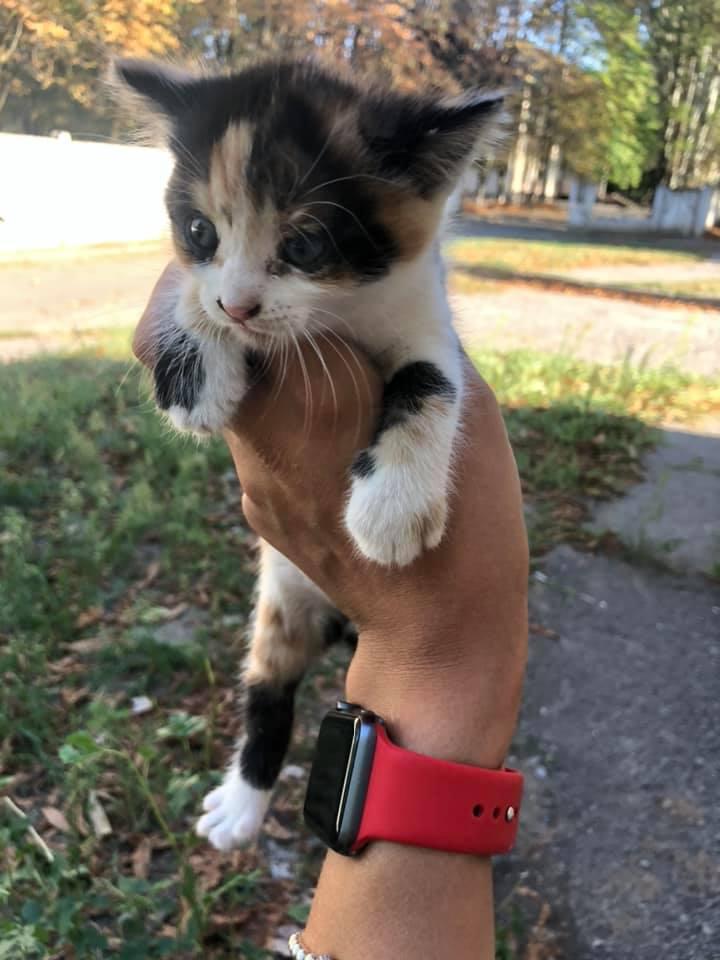 В Никополе раздают трехцветных котят