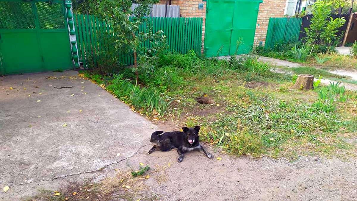 ТЕРМІНОВО! Нелюди викинули собаку з дому