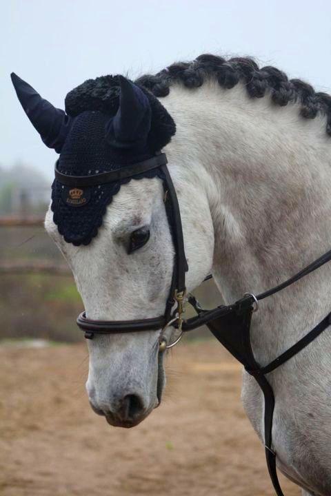 На соревнованиях в Запорожье два призовых места занял воспитанник конного клуба из Никополя, фото-1