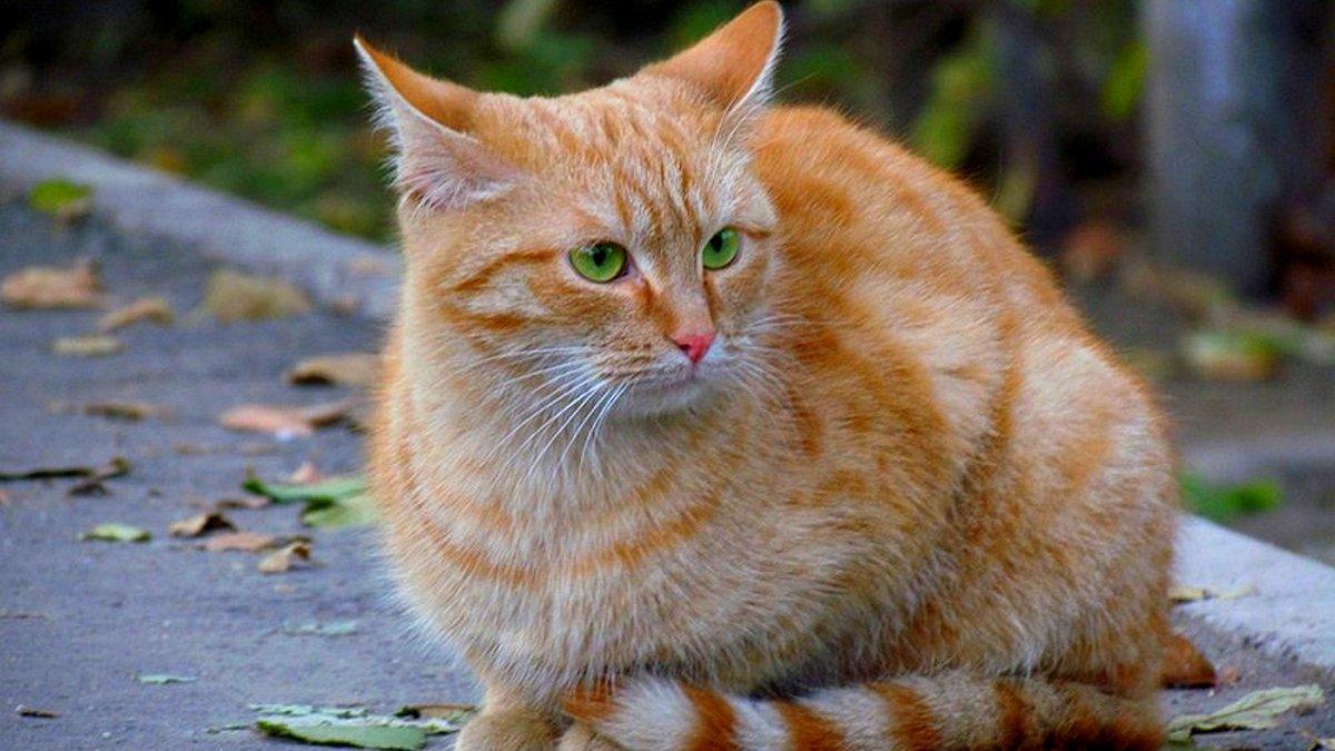 Врятуй кота: фото тих, хто шукає тебе