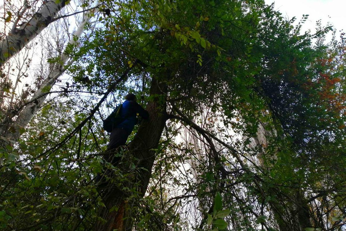 В Никополе кота, который пять суток просидел на дереве освободили из ловушки