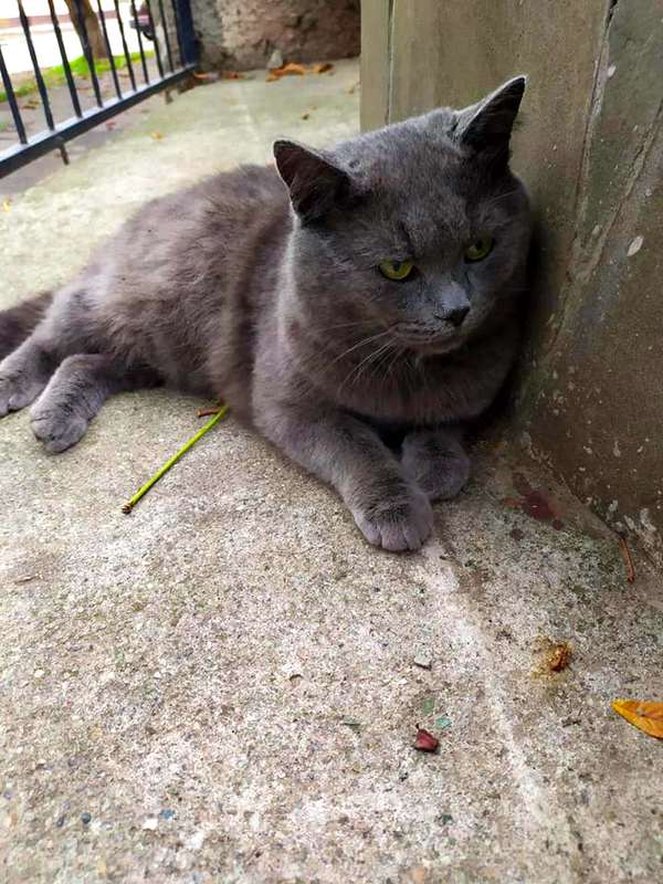 Права тварин: кіт шукає дім у Нікополі