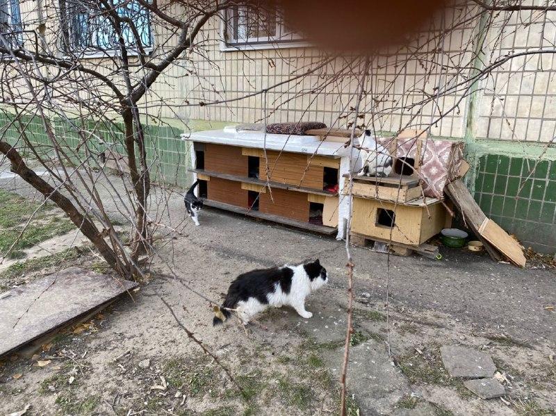 Поселення бездомних котів у Нікополі
