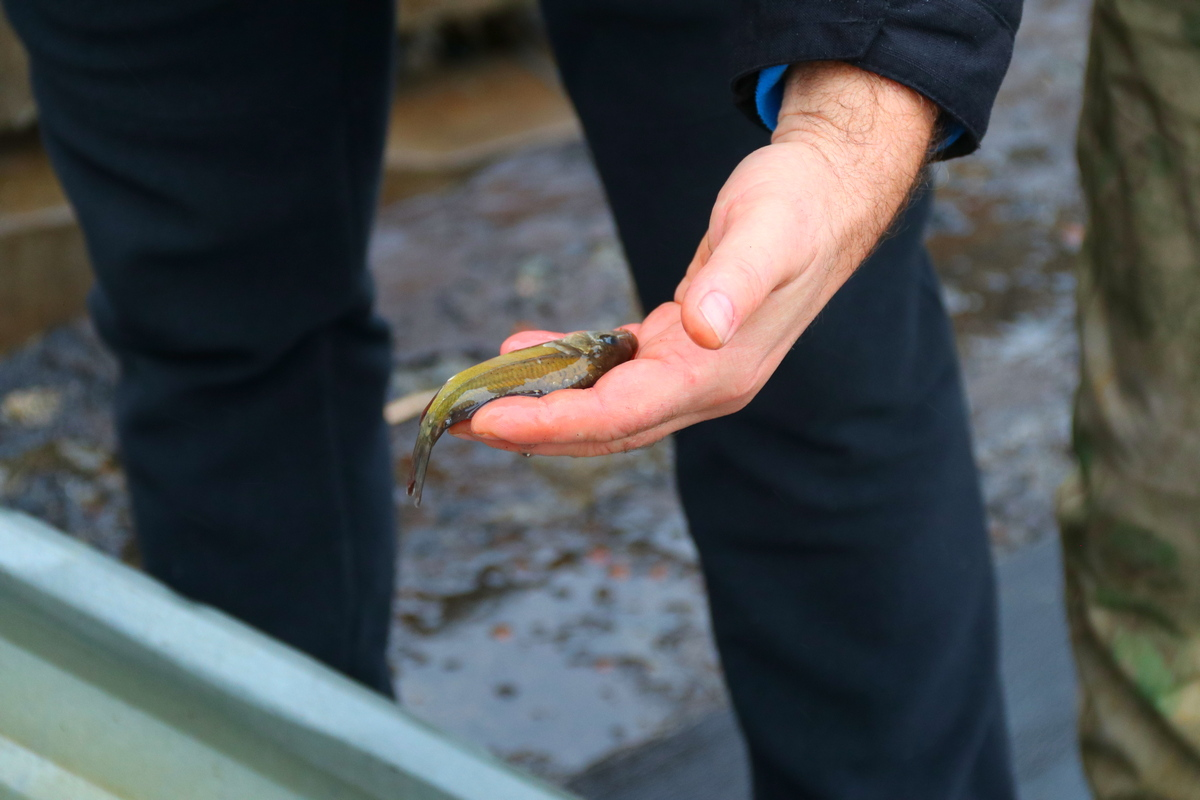 У Каховське море запускають рибу
