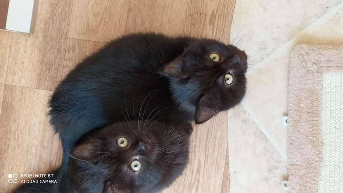 Котята приносят счастье