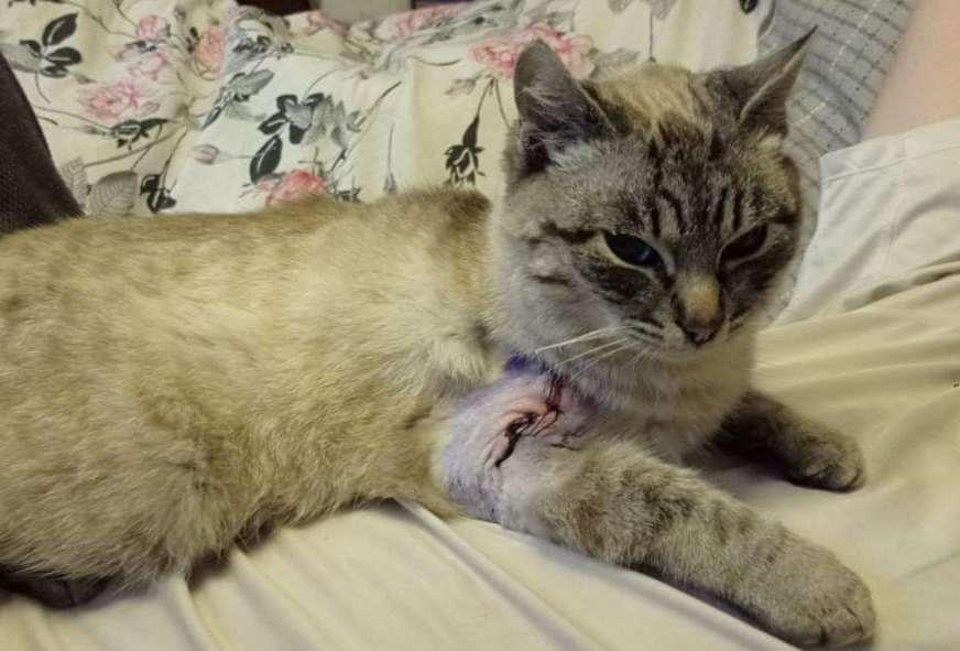 Обычный бездомный кот нуждается в вашей помощи