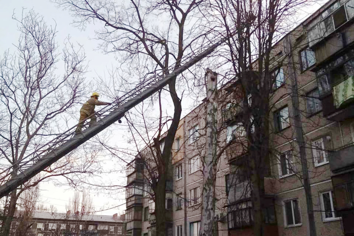 В Никополе на улице Шевченко спасатели сняли кота с 12-метрового дерева