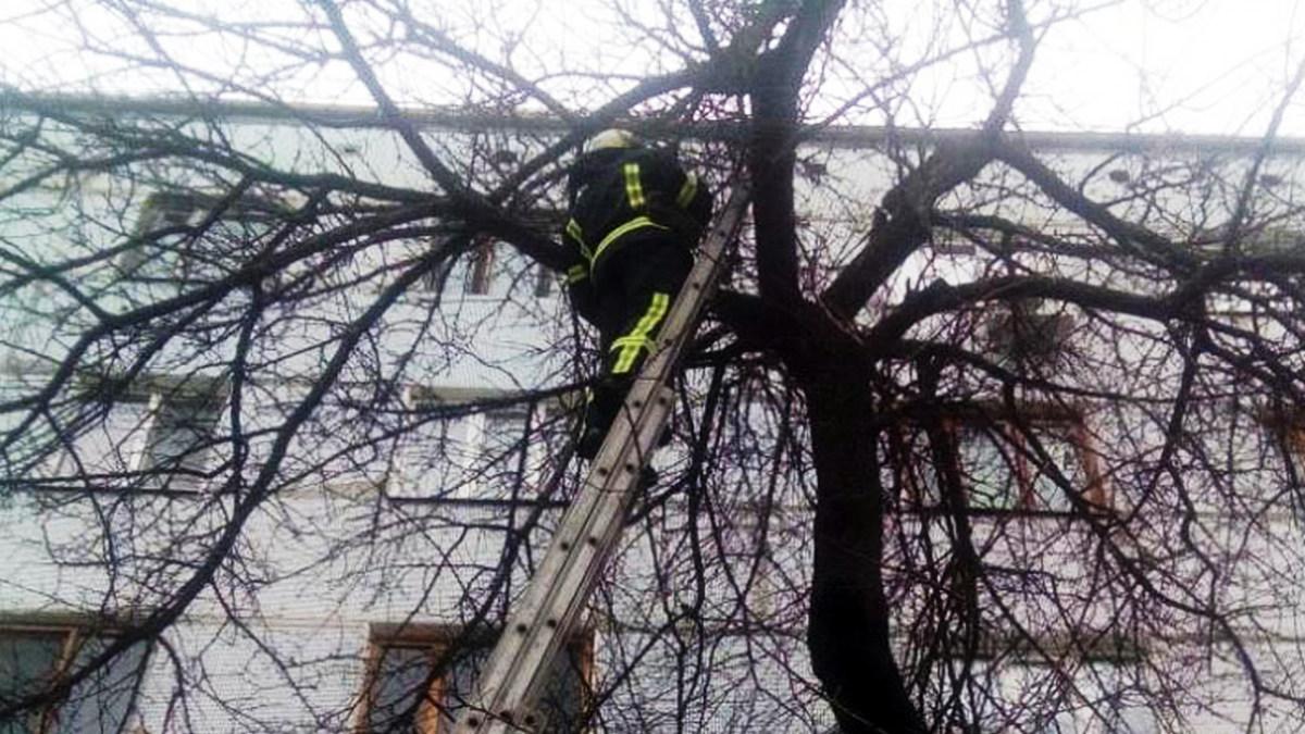 Спасатели из Апостолова помогли снять кота с высокого дерева
