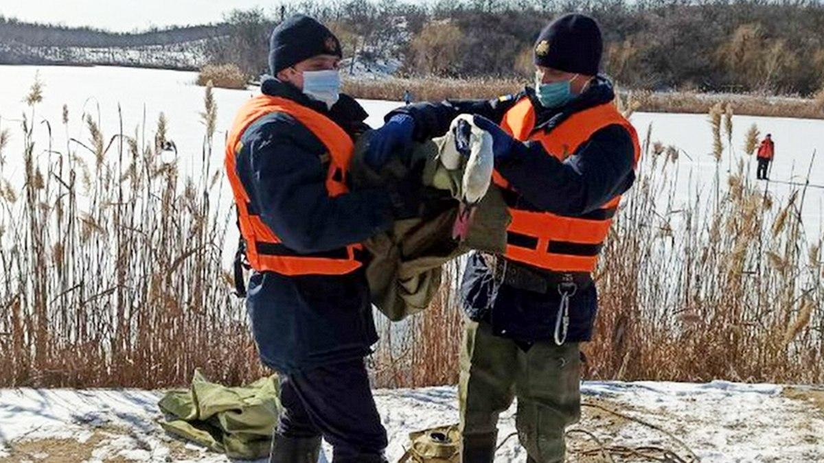 В Покрове спасатели помогли обессиленному лебедю